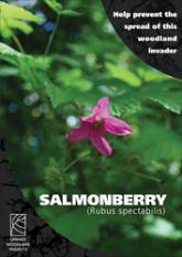 Salmonberry Leaflet