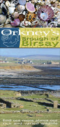 Orkney's Broch of Birsay
